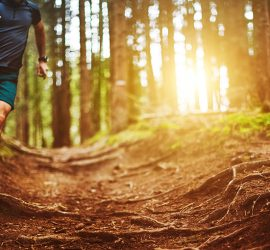 Sunset Trail Runs
